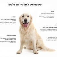 מה זה מזון היפואלרגני ואוכל רפואי לכלבים?
