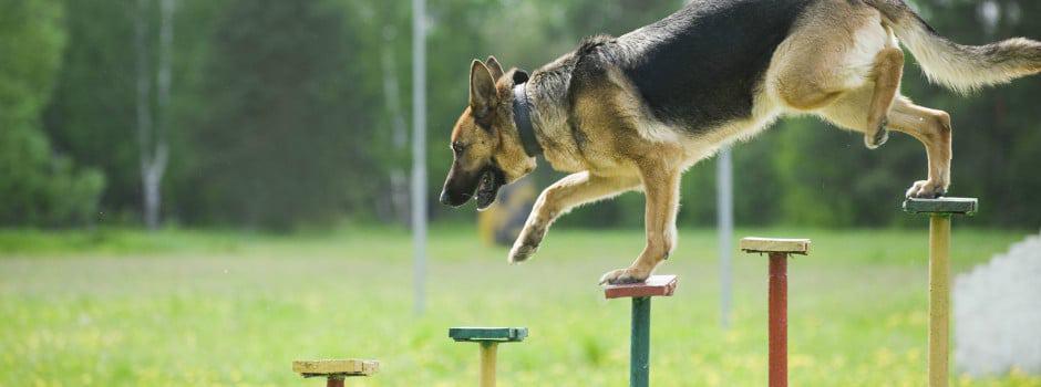 אילוף ואימון כלב לצרכים