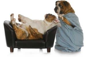 פסיכולוגיה של כלבים