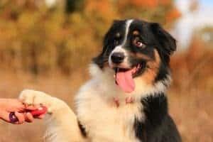 אילוף ואימון כלב לתת יד