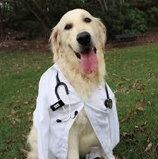איך נבחר בין אוכל רפואי למזון היפוארלגני לכלבים ?