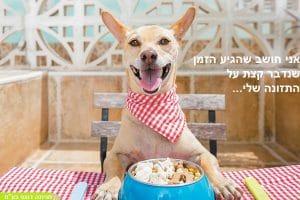 תזונת כלבים ועקרונות בבחירת אוכל.